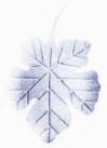 Frunze vita Aluminiu mica/mare